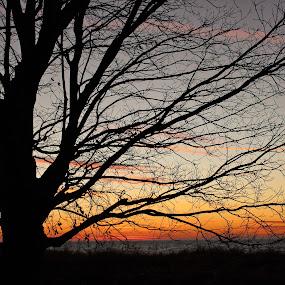 Rickety Tree in Afterglow by Jennifer Smusz - Landscapes Sunsets & Sunrises ( #tree #afterglow #sunset #michigan #lake #beauty #orange #winter )