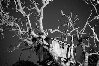 Photo: Treehouse - Los Angeles, CA