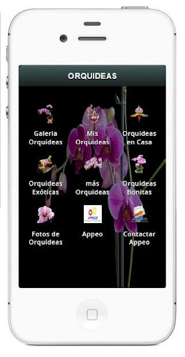Orquideas Bonitas