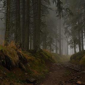 Mlhavý les by Jana Černošková - Landscapes Forests ( fog, forest,  )