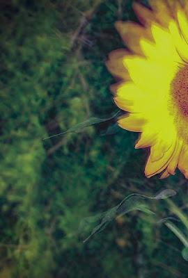 Il fiore nascosto di gocciazzurra