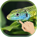 Magic Ripple Lizard LWP icon