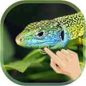 Magic Ripple Lizard LWP
