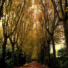 ALAMEDA... by Luis Orchevecs Ferenczi - Nature Up Close Trees & Bushes