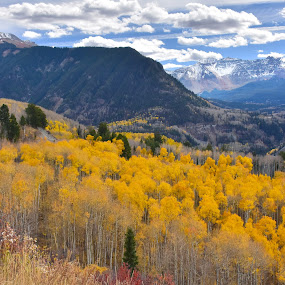 Colorado in the Fall by Dawn Hoehn Hagler - Landscapes Mountains & Hills ( mountains, autumn, fall, colorado, trees,  )