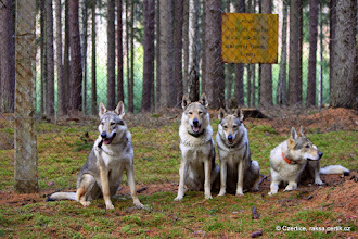 Photo: The sign says: Beware, entry forbidden, property guarded by dogs, your life may be in danger.