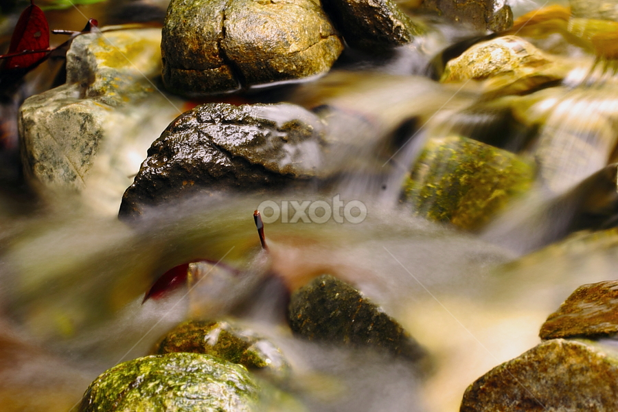 by Jasen Tan - Nature Up Close Water