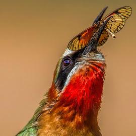 Butterfly snack by JD Lotz - Animals Birds