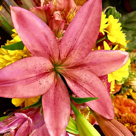 Pink Lily by Peter DiMarco - Flowers Single Flower ( floral, flowers, pink flower, flower, lilly )