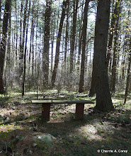 Photo: Timber Trail bench