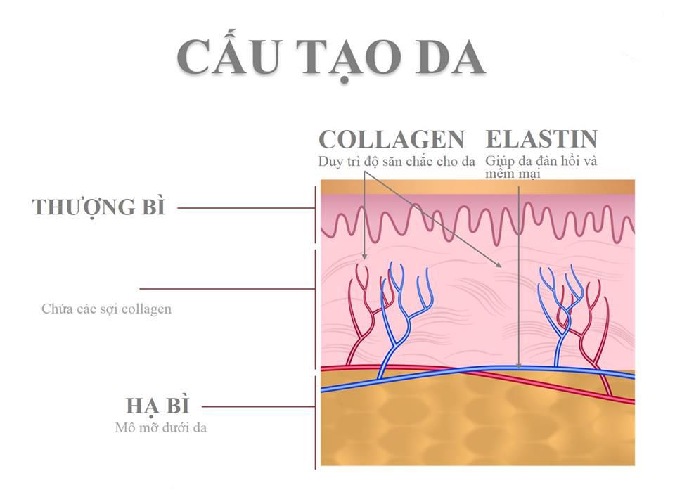 uong-collagen-co-tot-khong