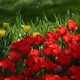 by M K - Flowers Flower Gardens (  )