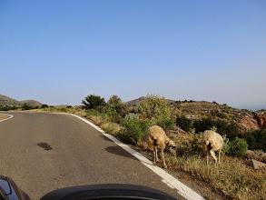 Photo: 05.Po drodze często mijamy pasące się owieczki.