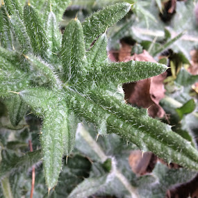 by Sonja Lawrence - Nature Up Close Other plants
