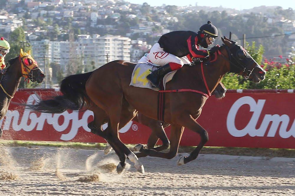 Garota Do Rio (Diamond Tycoon) se queda con Handicap (1100m-Arena-VSC).