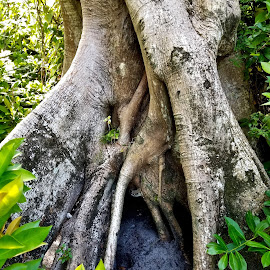 Roots of a Tree by Michael Villecco - Nature Up Close Trees & Bushes (  )