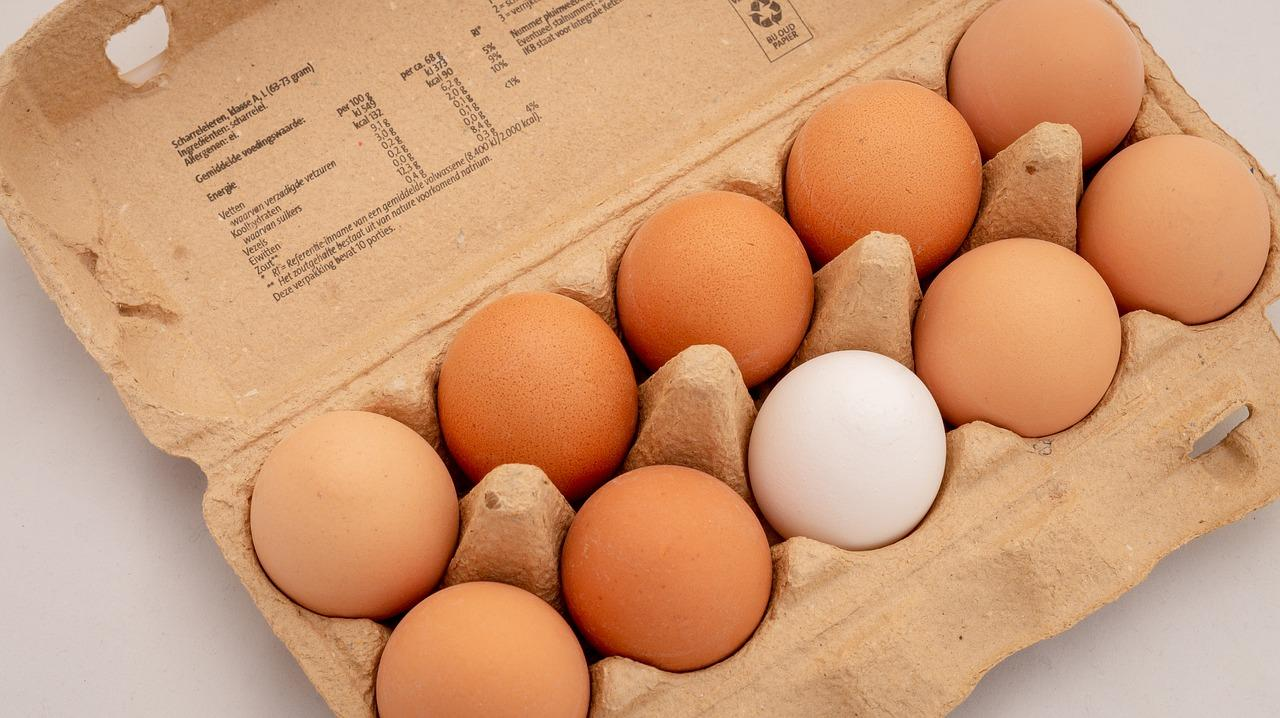 food storage tips for egg