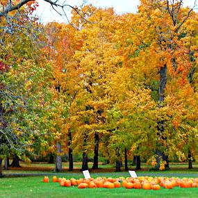 by Dawn Price - Uncategorized All Uncategorized ( fall leaves, pumpkins, fall trees,  )