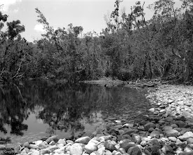 Photo: Another look at the waterhole on Sunday Creek. I think I have to go back there with a large format camera.  Camera - Mamiya 7 Lens - Mamiya 65mm 1:4 Film - Fomapan 100 Process - T-Max developer 1+4