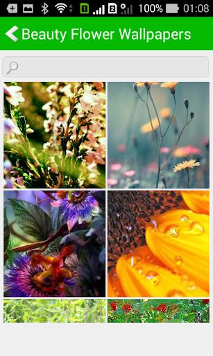 Beauty Flower Wallpapers HD