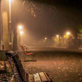 november fog by Cornelius D - City,  Street & Park  City Parks