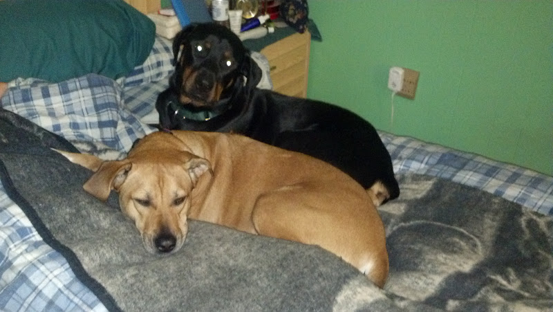Photo: Ginger and her new foster buddy Wilson