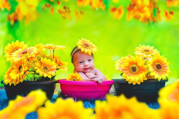 flowers flowers flowers di simona cancelli
