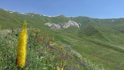 Colorful mountain grassland.