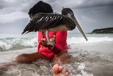 vrouw, zittend in stromend water, met pelikaan op een hand