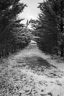 La prima neve del NUovo Anno di mario_ph78