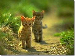 cat11024