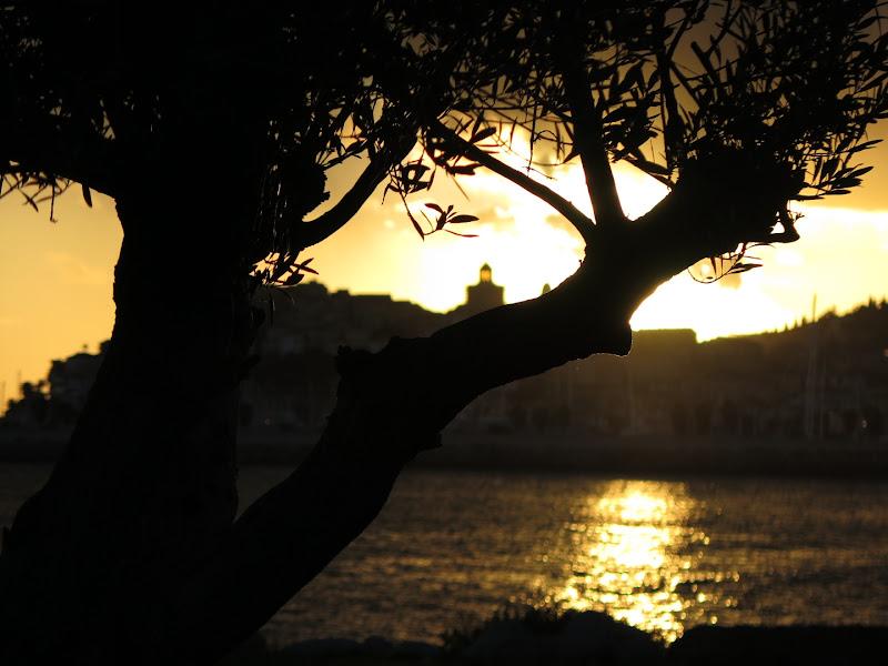 il tramonto e l'ulivo di malte