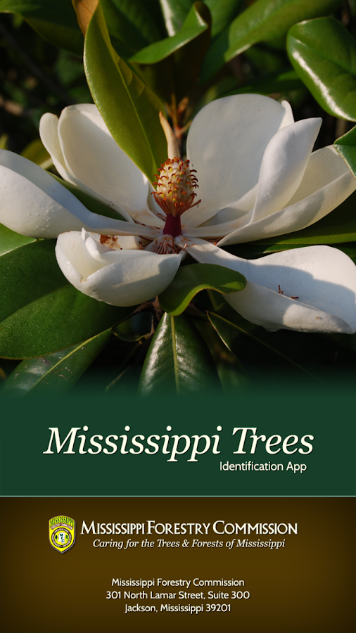 Mississippi Trees- screenshot