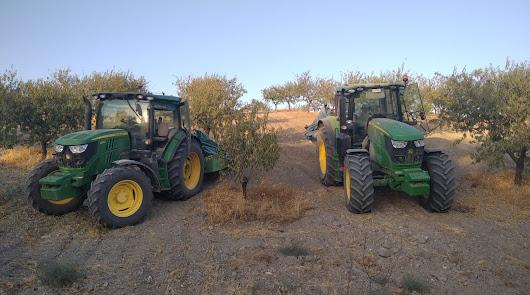 ASAJA confirma la reducción en un 60% de la cosecha de almendra en la provincia