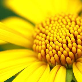 Flower Bud by Hafizi Ahmad - Nature Up Close Flowers - 2011-2013