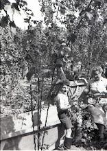 Photo: Hop Picking - Wateringbury Kent