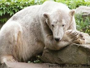 Photo: Knut haengt entspannt ab ;-)