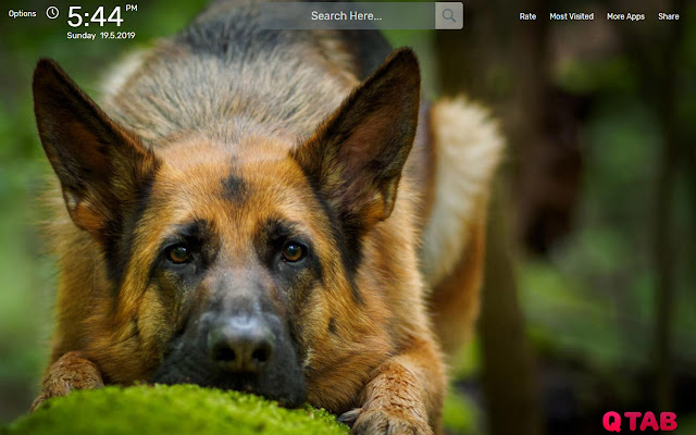 German Shepherd Wallpapers Hd Theme