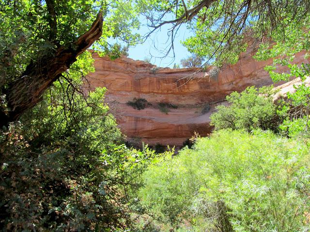 Heavy vegetation below a dryfall