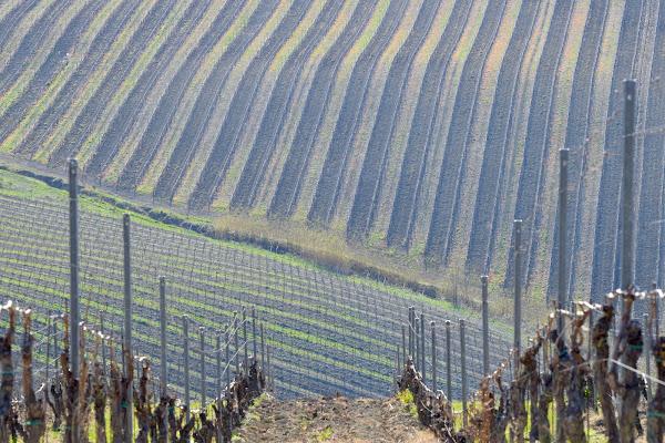 vigne di s_ornella
