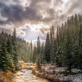 Newsome Creek by Evan Jones - Landscapes Forests ( clouds, idaho, elk city, clearwater river, snow, moody, trees, snowy, forest, hwy 14, golden, newsome creek,  )