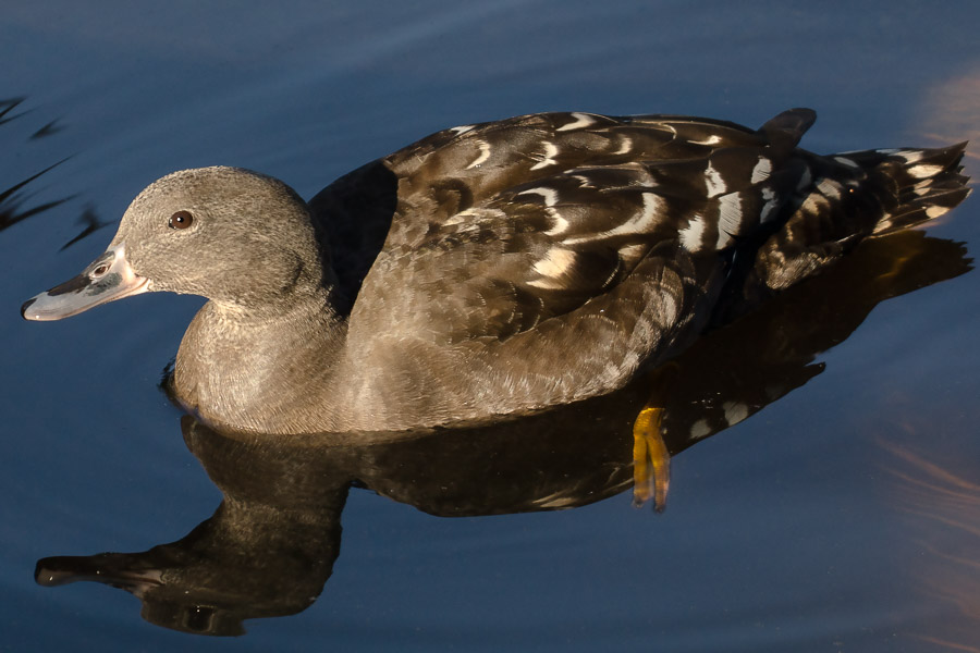 by David Botha - Animals Birds