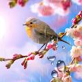 Flower Live Wallpaper APK