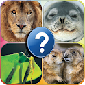 Gotcha Royal Animals Quiz icon
