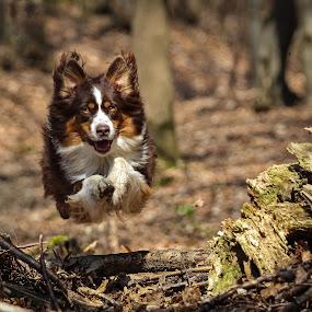 Rocket man by Mathias Ahrens - Animals - Dogs Running