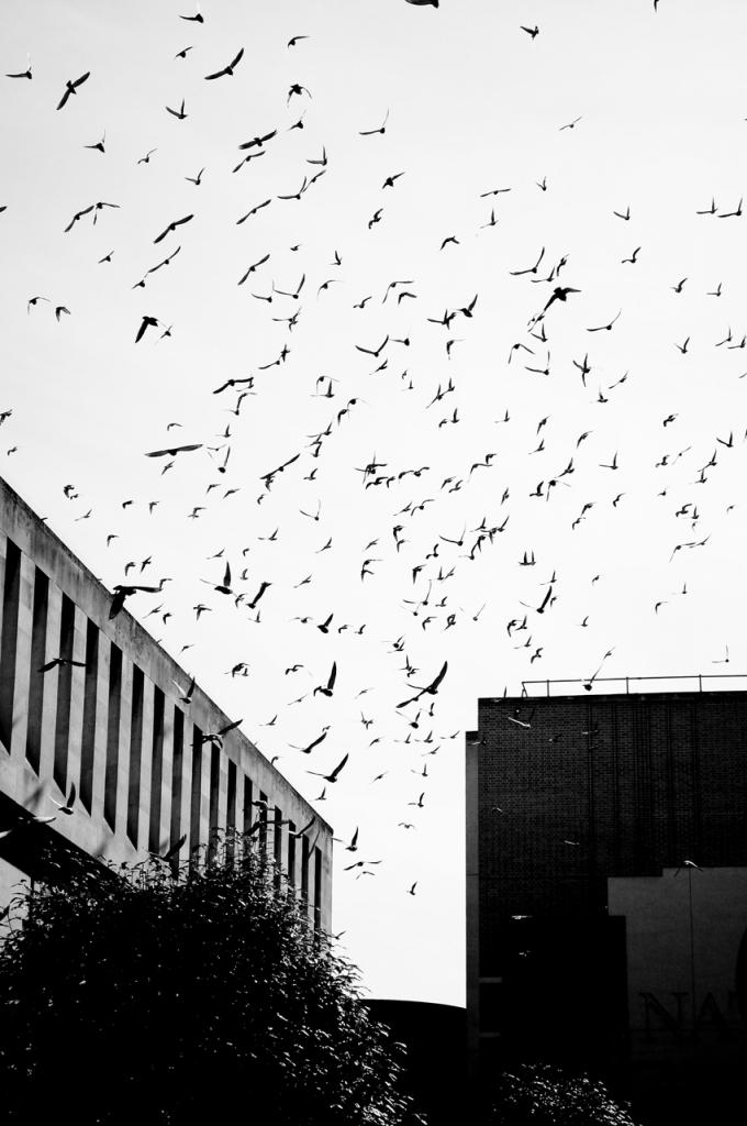 Gli uccelli di dr.dinamite
