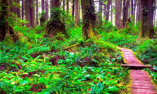 春の森の脱出