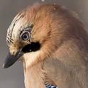 lwp pássaro em movimento