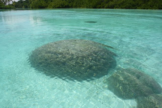 Photo: nice clear water