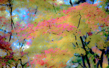 """Photo: This photo appeared in an article on my blog on Feb 19, 2013. この写真は2月19日ブログの記事に載りました。 """"My First Visit To Kyoto's Shugakuin Imperial Villa"""" http://regex.info/blog/2013-02-19/2213"""